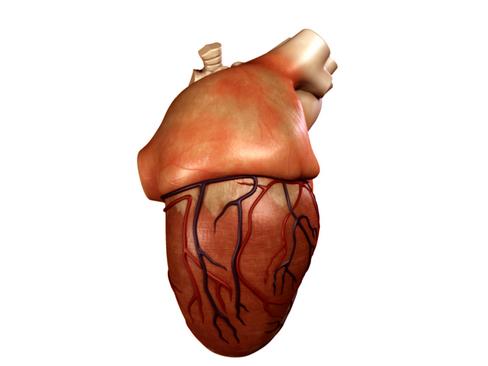 Heart 3d model 3ds max lwo lws lw ma mb obj 116675