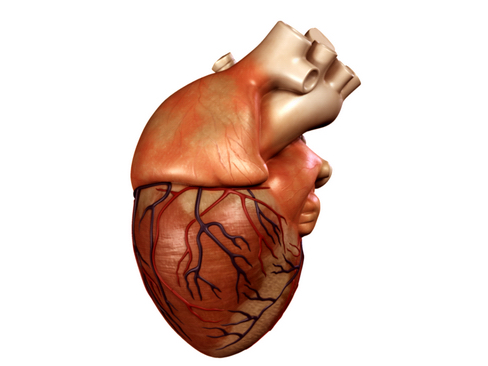 Heart 3d model 3ds max lwo lws lw ma mb obj 116676
