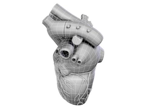Heart 3d model 3ds max lwo lws lw ma mb obj 116678