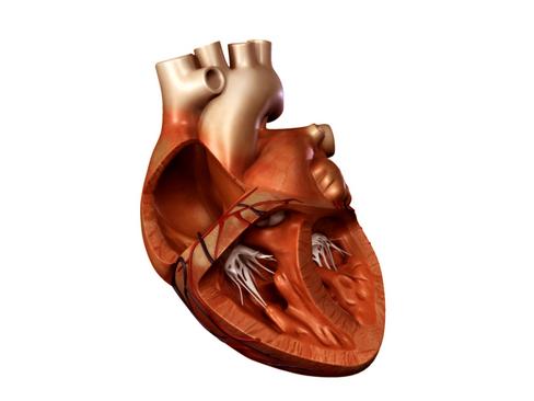 Heart 3d model 3ds max lwo lws lw ma mb obj 116683
