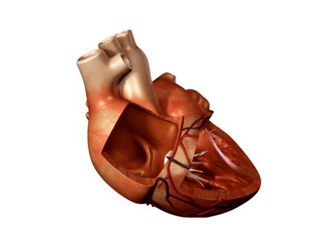 Heart 3d model 3ds max lwo lws lw ma mb obj 116684