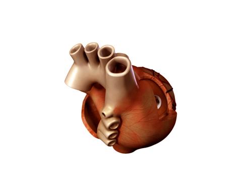Heart 3d model 3ds max lwo lws lw ma mb obj 116686