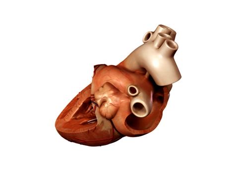Heart 3d model 3ds max lwo lws lw ma mb obj 116689
