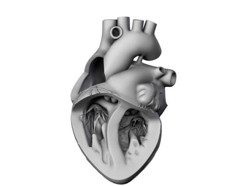 Heart 3d model 3ds max lwo lws lw ma mb obj 116690