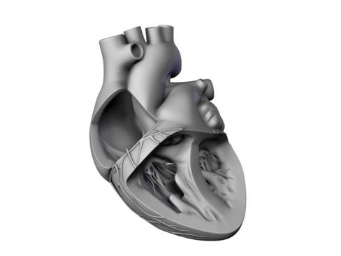 Heart 3d model 3ds max lwo lws lw ma mb obj 116691