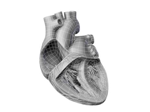 Heart 3d model 3ds max lwo lws lw ma mb obj 116696