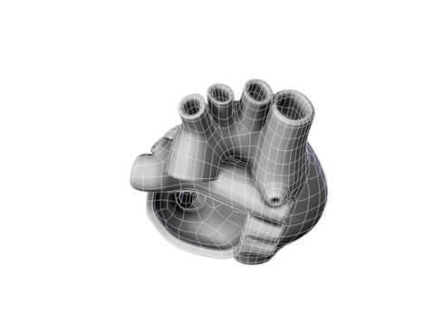 Heart 3d model 3ds max lwo lws lw ma mb obj 116698