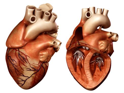 Heart 3d model 3ds max lwo lws lw ma mb obj 116700