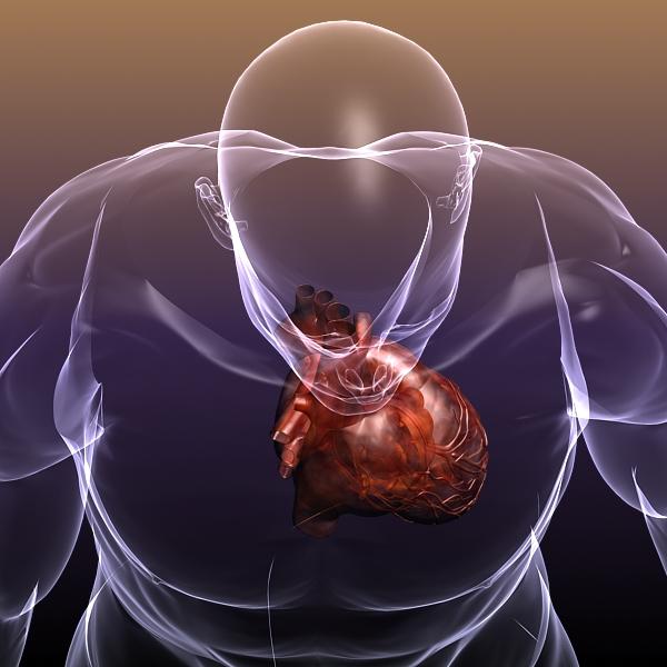 heart in a human body 3d model 3ds max dxf dwg fbx cob c4d x lwo other 3dm skp hrc xsi texture wrl wrz obj 115963