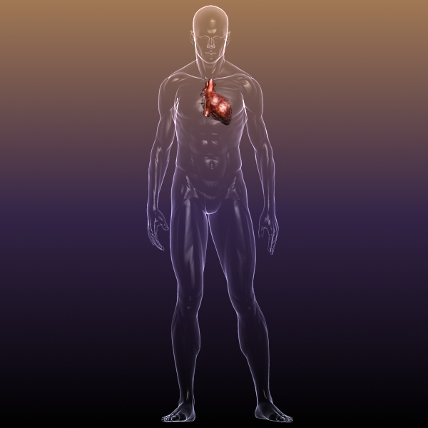 heart in a human body 3d model 3ds max dxf dwg fbx cob c4d x lwo other 3dm skp hrc xsi texture wrl wrz obj 115964