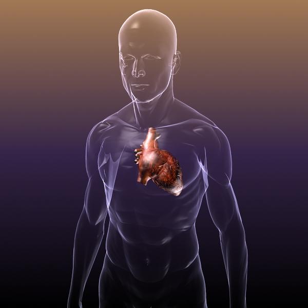 heart in a human body 3d model 3ds max dxf dwg fbx cob c4d x lwo other 3dm skp hrc xsi texture wrl wrz obj 115968