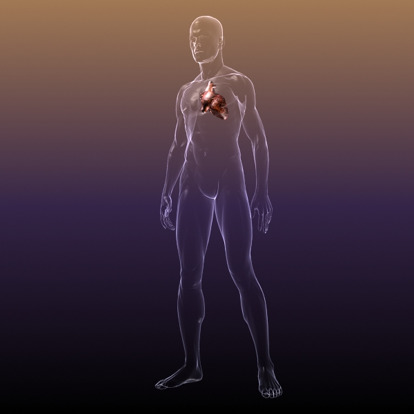 heart in a human body 3d model 3ds max dxf dwg fbx cob c4d x lwo other 3dm skp hrc xsi texture wrl wrz obj 115969