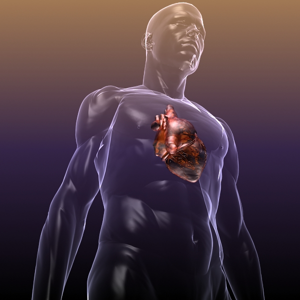 heart in a human body 3d model 3ds max dxf dwg fbx cob c4d x lwo other 3dm skp hrc xsi texture wrl wrz obj 115970