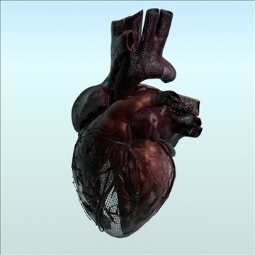 human heart internal 3d model 3ds fbx lwo ma mb other hrc xsi obj 111563