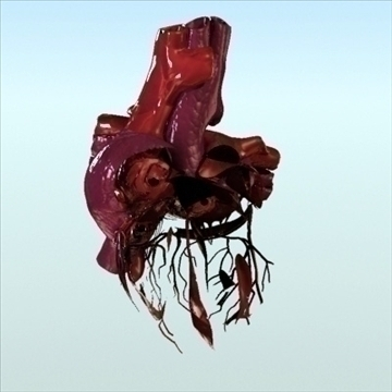 human heart internal 3d model 3ds fbx lwo ma mb other hrc xsi obj 111564