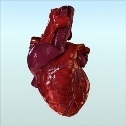 Human Heart Internal ( 70.02KB jpg by 3DArtisan )