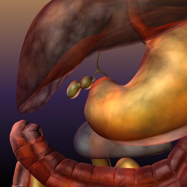 digestive system of a human 3d model max texture 117790