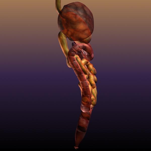 digestive system of a human 3d model max texture 117791