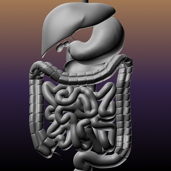 digestive system of a human 3d model max texture 117793