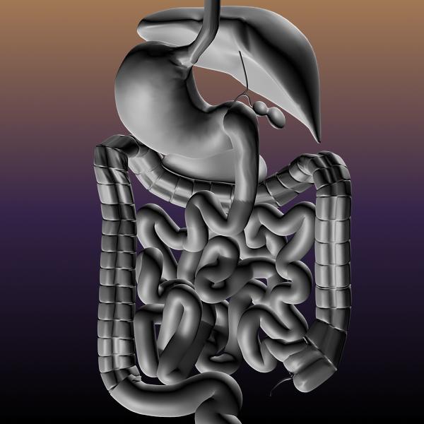 digestive system of a human 3d model max texture 117794