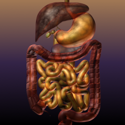 Digestive System of a Human ( 382.59KB png by 5starsModels )