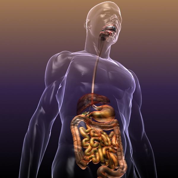human anatomy: digestive system 3d model 3ds max fbx c4d lwo ma mb hrc xsi texture obj 117660