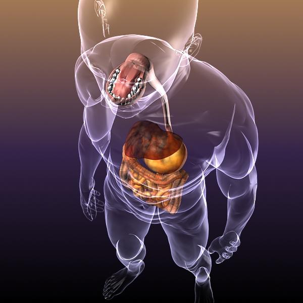 human anatomy: digestive system 3d model 3ds max fbx c4d lwo ma mb hrc xsi texture obj 117665