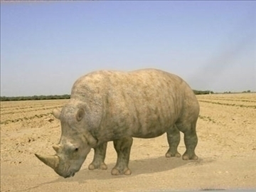 rhino 3d model 3ds jpeg jpg lwo 86688