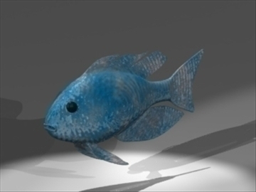 african cichlid 3d model 3ds dxf lwo 80670