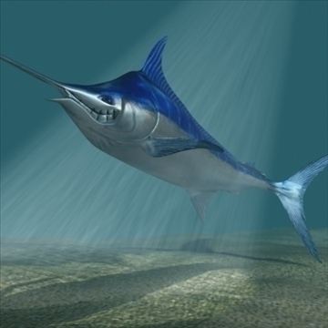 blue marlin toon fish 3d model 3ds max lwo obj 106594