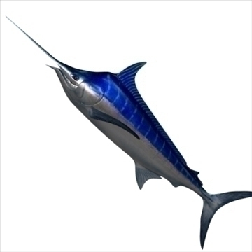 blue marlin toon fish 3d model 3ds max lwo obj 106596