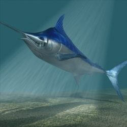 Blue marlin toon fish 3D ( 71.82KB jpg by supercigale )