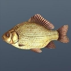 Crucian ( 62.92KB jpg by Inventerion_Productions )