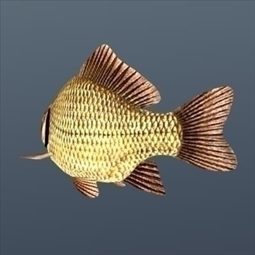 crucian animated 3d model max fbx ma mb 94282