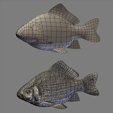 crucian animated 3d model max fbx ma mb 94283