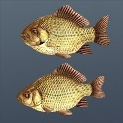 Crucian Animated ( 77.96KB jpg by Inventerion_Productions )