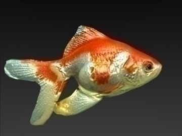 gold fish 3d model 3ds jpeg jpg lwo 86713