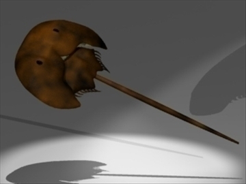 horseshoe crab 3d model 3ds dxf lwo 80691