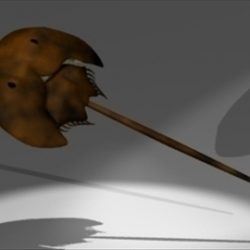 Horseshoe Crab ( 32.21KB jpg by epicsoftware )