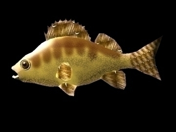 perch 3d model blend c4d 91475