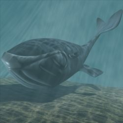 Toon whale 3D ( 68.64KB jpg by supercigale )