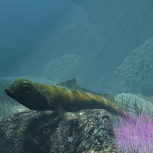 tripterygion fish wedi'i rigio 3d model 3ds max fbx lwo obj 112877