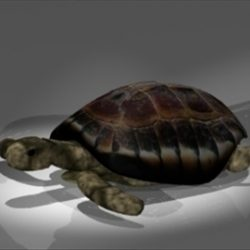 Turtle ( 38.03KB jpg by epicsoftware )
