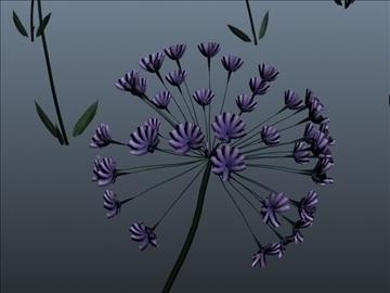 African Lily Set 001 ( 50.89KB jpg by Asephei )