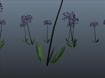 African Lily Set 001 ( 37.89KB jpg by Asephei )