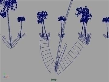 African Lily Set 001 ( 45.53KB jpg by Asephei )