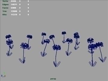 African Lily Set 001 ( 33.33KB jpg by Asephei )