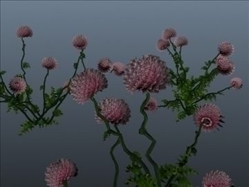 clover flower set 001 3d model 3ds max obj 102666