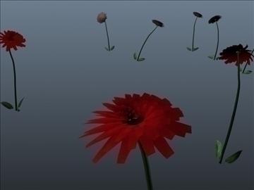 dahlia flower set 001 3d model 3ds max obj 102693