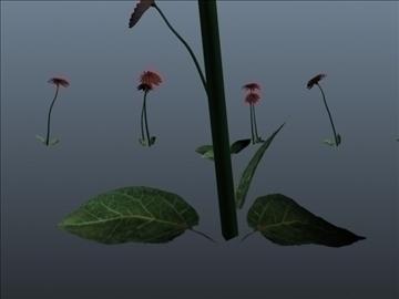 dahlia flower set 001 3d model 3ds max obj 102694